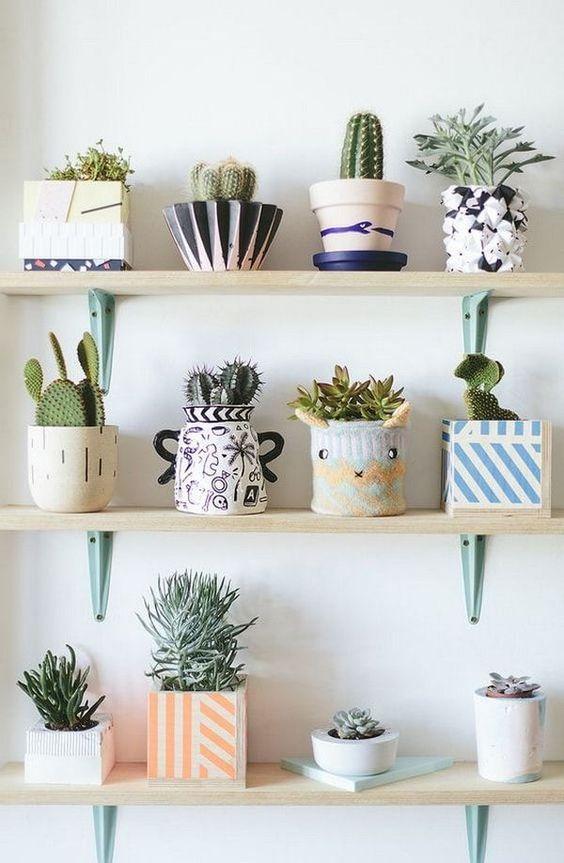 Decora tu casa con plantas suculentas