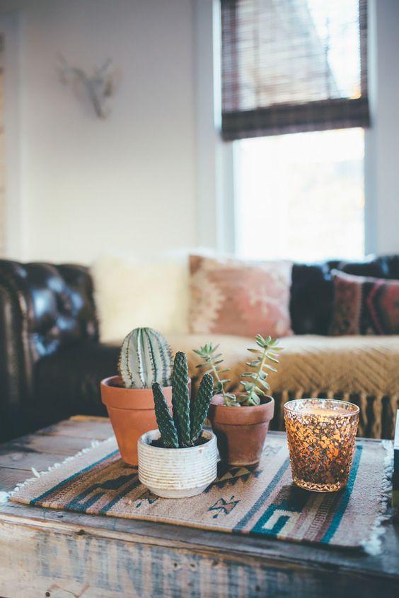 plantas suculentas decoración