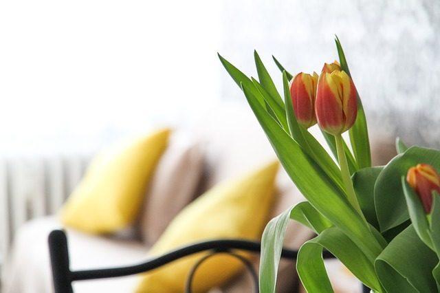 plantas de interior con flores todo el año