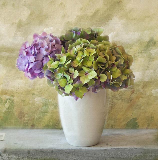 plantas de invierno: hortensia