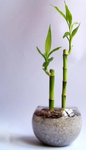 Plantas que pueden crecer en agua