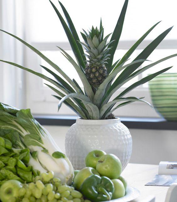 cuidados ananas planta pina