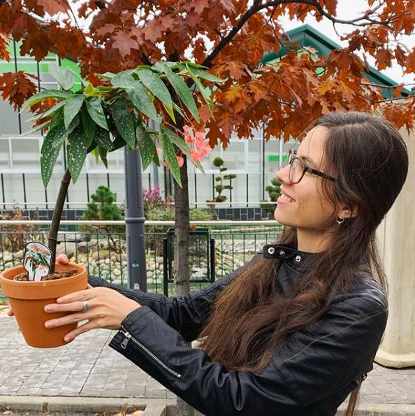 cuidados begonia tamaya