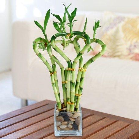 cuidados bambu ikea
